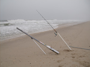 New jersey fishing reports for Nj surf fishing report